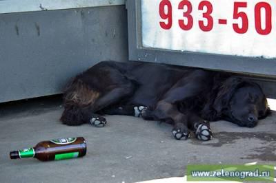жалоба на бродячих собак образец заполнения