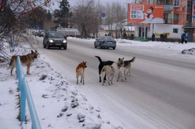 образец жалобы на бродячих собак